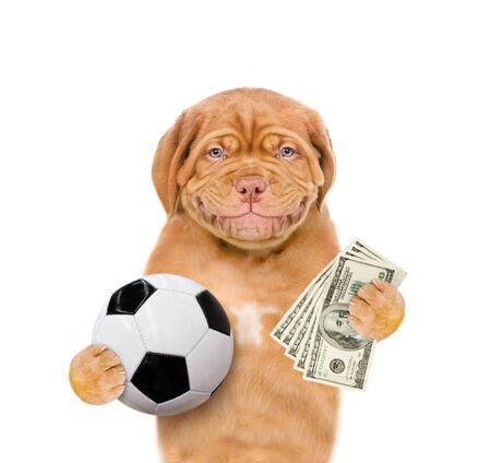 Funny dog holding dollars and ball in his paws. isolated on white background.