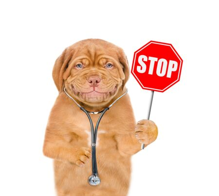 Smiling puppy with a stethoscope on his neck and sign stop in paw. isolated on white background. Foto de archivo
