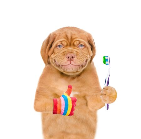 Smiling puppy with  toothbrush showing thumbs up. isolated on white background. Zdjęcie Seryjne
