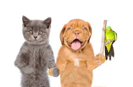 Dog with cat holding stick with parrot. isolated on white background. Foto de archivo - 133390856