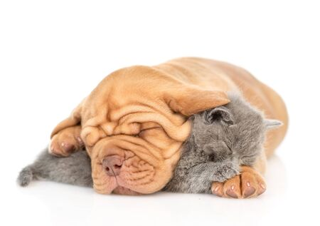Mastiff puppy embracing sleeping kitten. isolated on white background. Foto de archivo - 133390859