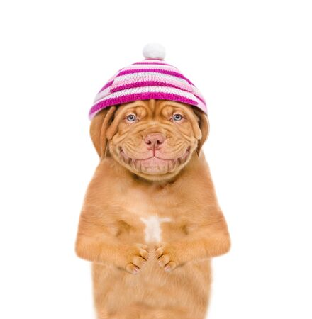 Smiling puppy  wearing a warm hat with pompon. isolated on white background. Foto de archivo - 133390866