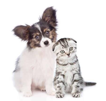 Papillon puppy and kitten with tilt heads sitting together. isolated on white background. Foto de archivo - 133390868