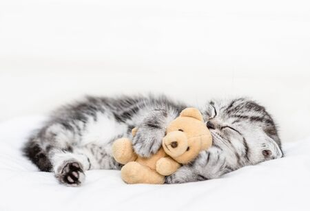 Baby kitten sleeping with toy bear on pillow at home.