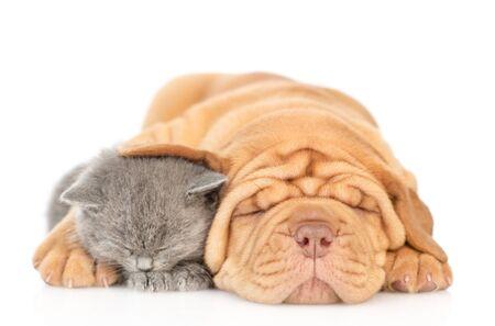 Mastiff puppy hugging sleeping kitten in front view. isolated on white background. Foto de archivo - 133390885