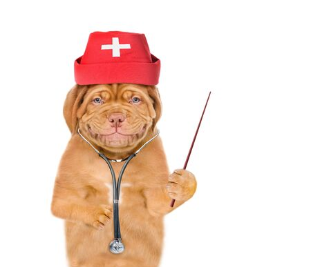 Smiling puppy dressed like a doctor with a stethoscope on his neck showing thumbs up. isolated on white background. Foto de archivo - 133390896