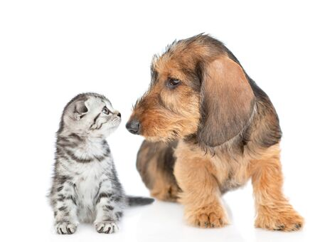 Puppy and kitten look at each other. Isolated on white background.