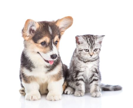 Funny corgi puppy and tabby kitten looking away together. isolated on white background. Foto de archivo - 133390928