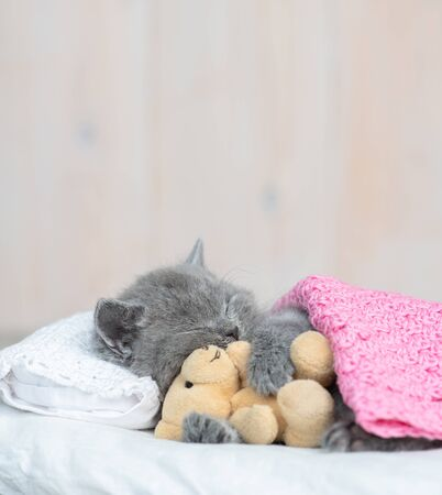 Baby kitten sleeping with toy bear on pillow under blanket at home. Stok Fotoğraf