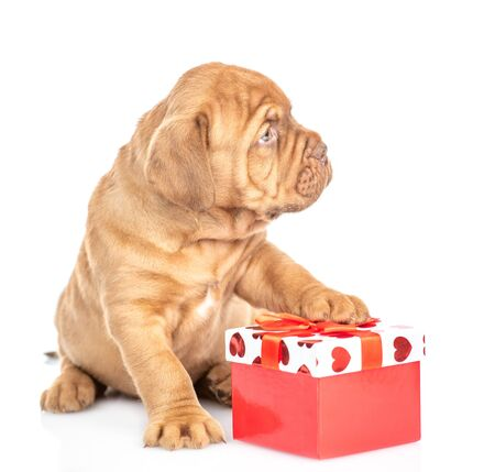 Little mastiff puppy with gift box looking away. isolated on white background. Foto de archivo - 133390949