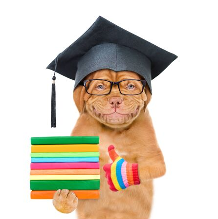 Graduated dog with eyeglasses holds books and showing thumbs up. isolated on white background.