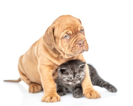 Mastiff puppy hugging baby kitten and looking away. isolated on white background. Foto de archivo - 133390959