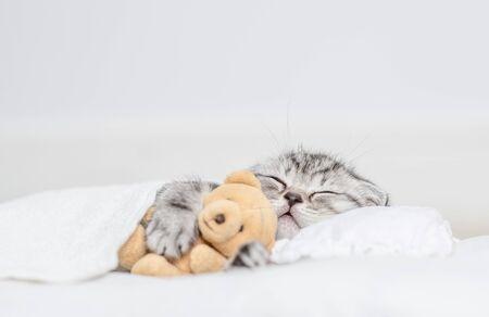 Gatito atigrado durmiendo con oso de juguete sobre una almohada debajo de una manta. Foto de archivo