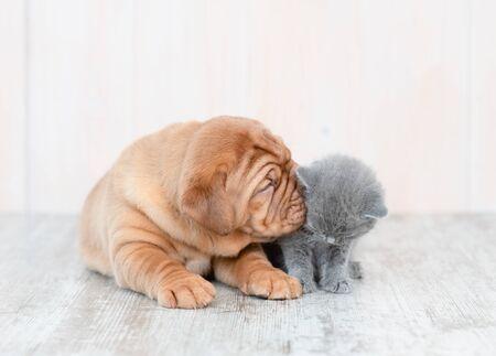 Mastiff-Welpe, der zu Hause Kätzchen auf dem Boden küsst.
