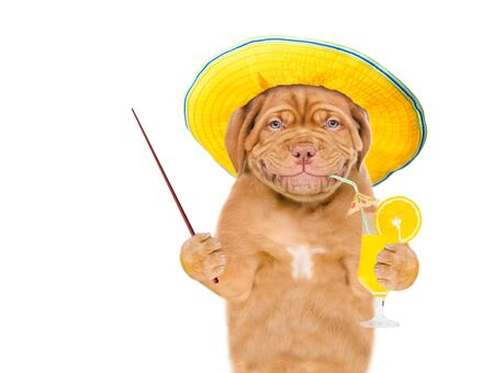 Smilng puppy with sunglasses holds tropic cocktail and pointing stick. isolated on white background. Stockfoto