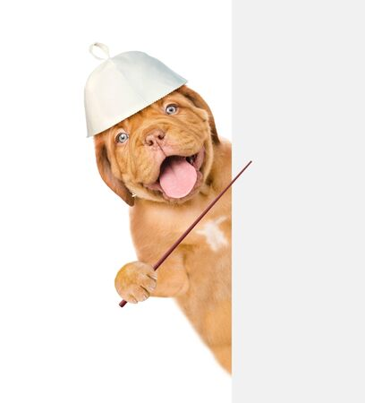 Happy puppy in the hat for a sauna pointing on empty white banner. isolated on white background.