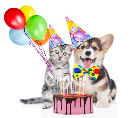 Funny puppy and kitten in party hats holds balloons with birthday cake with many burning candles. isolated on white background.