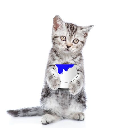 Tabby kitten with paint bucket looking at camera. isolated on white background.