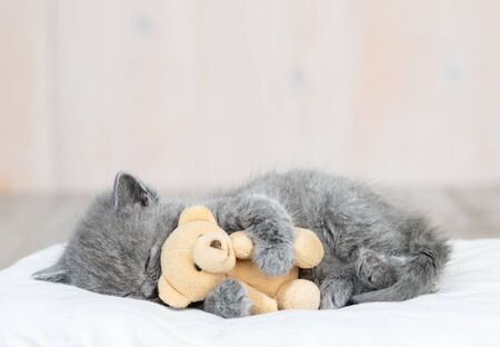 Sleeping kitten hugs toy bear.