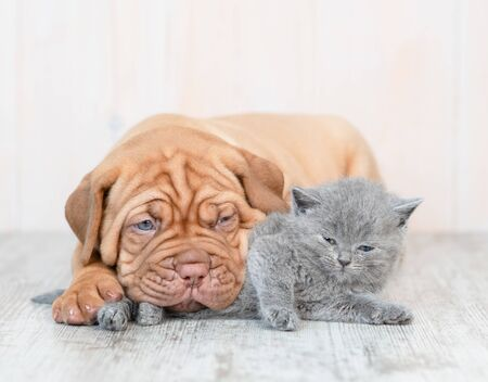 Puppy hugging kitten on the floor at home.