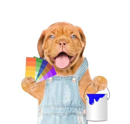 Funny puppy in blue overalls with color samples and paint bucket. isolated on white background.