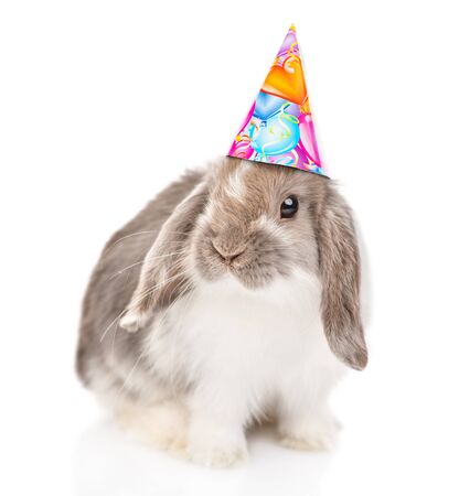 Gray rabbit  in birthday hat looking at camera. isolated on white background. Reklamní fotografie