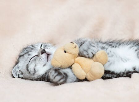 Baby kitten sleeping on the bed with toy bear at home. Stock Photo