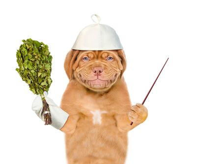 Smiling puppy in a hat for a sauna holding a birch broom and pointing away on empty space.  isolated on white background.
