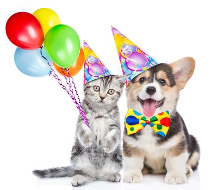 Corgi puppy and kitten holds balloons. isolated on white background. Stock fotó