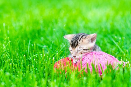 Baby bengal kitten sleeping on green grass with ball of yarn. Empty space for text.