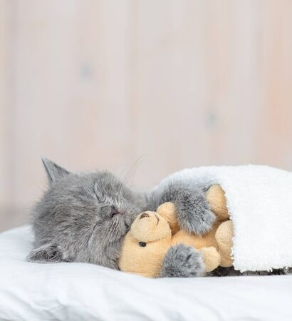 Baby kitten sleeping with toy bear under blanket. Empty space for text.