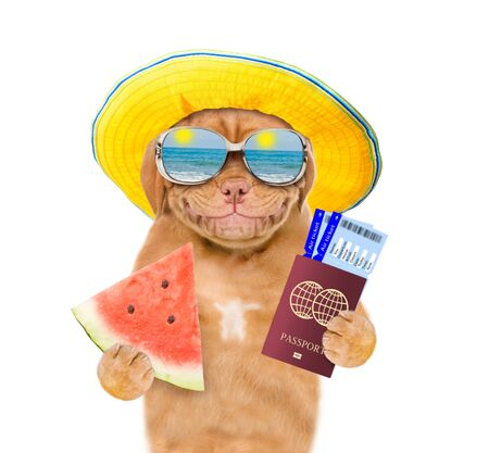 Smiling puppy with summer hat and mirrored sunglasses  holds tickets with  passport and watermelon. isolated on white background. Stockfoto