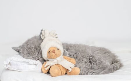 Cute baby kitten sleeping with toy bear on pillow at home.