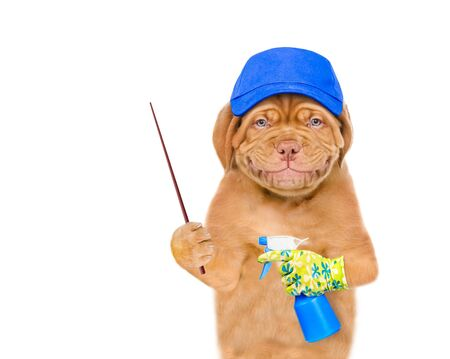 Smiling puppy in blue hat with a spray  pointing away. isolated on white background.