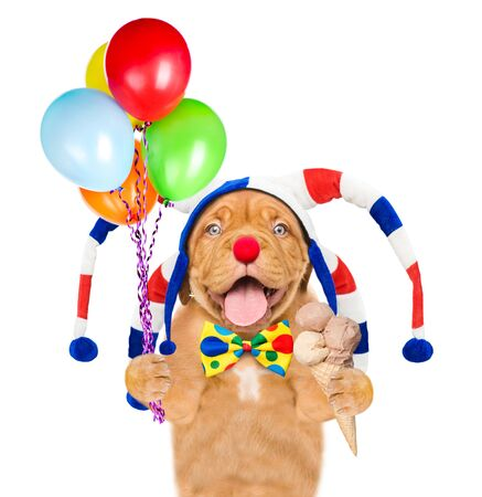 Funny puppy in jester cap holding ice cream and balloons. isolated on white background.