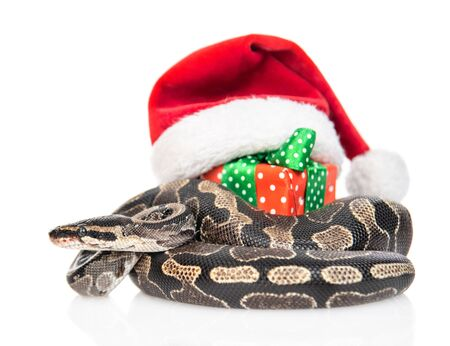 Snake with red christmas hat and gift box. isolated on white background.