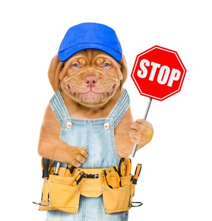 Smiling puppy in overalls and blue cap with tool belt showing stop sign. Isolated on white background.
