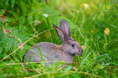 Rabbit sitting in green summer grass.