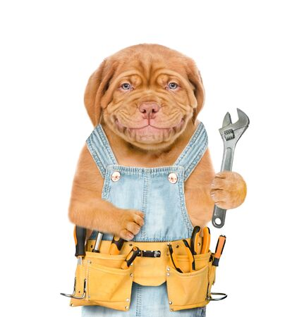 Smiling puppy worker with tool belt and adjustable wrench. Isolated on white background.