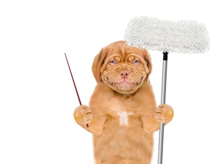 Cleaning concept. Smiling puppy holds mop in his paw and pointing away on empty space. isolated on white background.