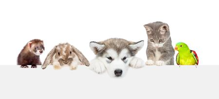 Large group of pets over empty white banner. isolated on white background. Empty space for text.