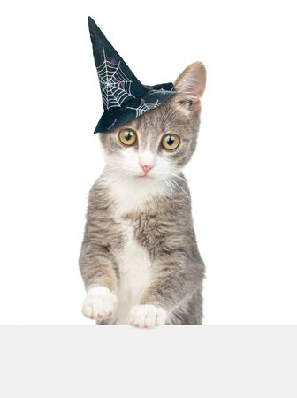 Kitten with hat for halloween above empty white banner. isolated on white background. Foto de archivo