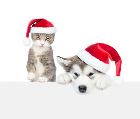 Cat and dog with red christmas hats above white banner. Empty space for text. Isolated on white background.