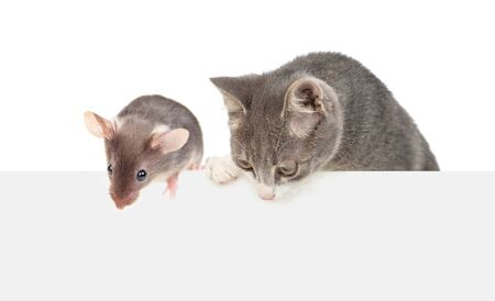Cat and mouse above empty white banner looking down. isolated on white background. Empty space for text.