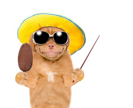 Smiling puppy with summer hat and  sunglasses holding ice cream and pointing away on empty space. isolated on white background. Stock fotó