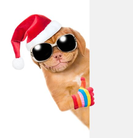 Smiling puppy in red christmas hat with sunglasses showing thumbs up above empty white banner. isolated on white background. 스톡 콘텐츠