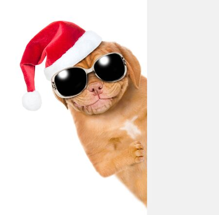 Smiling pupy in red christmas hat  and sunglasses behind empty white banner. isolated on white background.