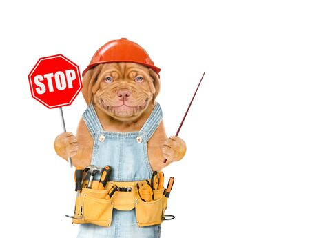 Smiling puppy in overalls and hard hat with tool belt showing stop sign and pointing away. Isolated on white background.