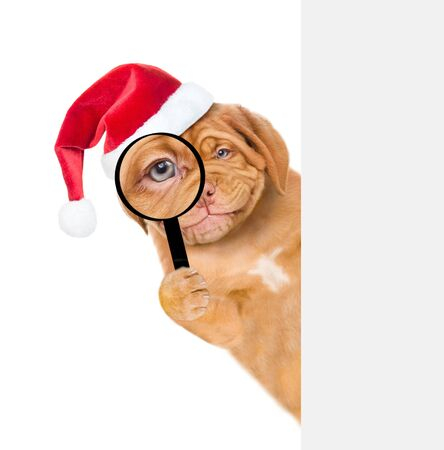Smiling puppy in red santa hat looks thru a magnifying lens. Isolated on white background.