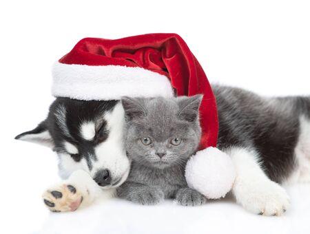Sleepy Siberian Husky puppy in red santa hat hugging british kitten. isolated on white background.